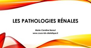 Pathologie renales