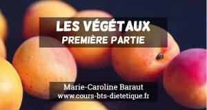 Connaissance des aliments Végétaux 1
