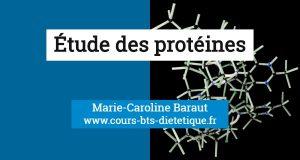 Nutrition proteines
